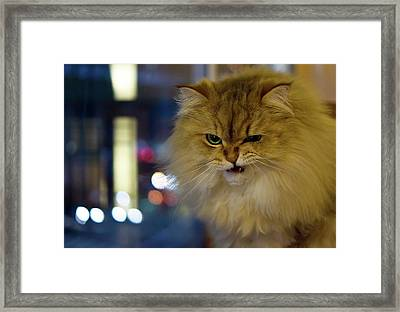 Long-haired Cat Beside Window Framed Print by Benjamin Torode