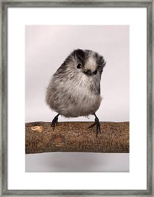Long-tailed Tit Framed Print by Les Stocker