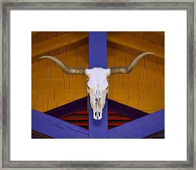 Longhorn Framed Print by Carol Leigh