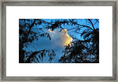 Look Beyond Framed Print by Cheryl Young