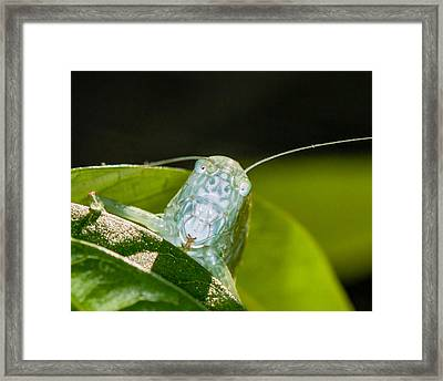 Looking At You Framed Print by Louis B
