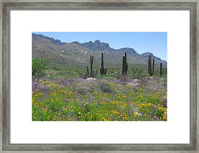 Looking South Framed Print by Elvira Butler