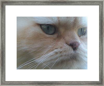 Lost In Thought Framed Print by DJ Laughlin