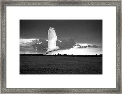 Lost Snowy Owl Framed Print by Joe Gee