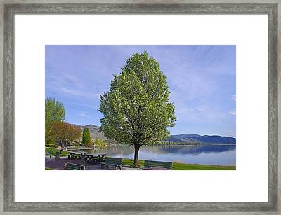 Lots Of Room To Sit Framed Print by John  Greaves