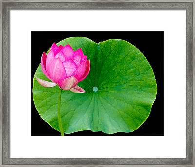 Lotus And Leaf Framed Print by Jean Noren