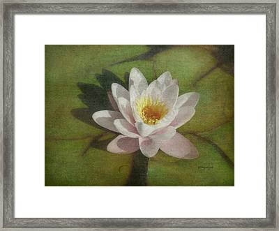 Lotus Blossom Textured Framed Print by Cindy Wright