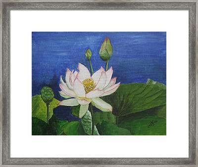 Lotus Flower Framed Print by Kim Selig