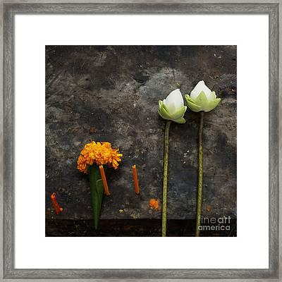 Lotus Flowers On A Thai Shrine Framed Print by Paul Grand