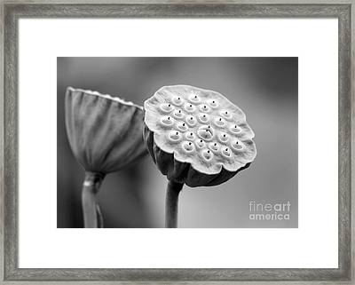 Lotus Pods In Black And White Framed Print by Sabrina L Ryan