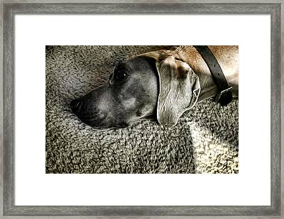 Lounging Framed Print by Adam Vance