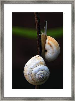 Love Affair Framed Print by Stelios Kleanthous