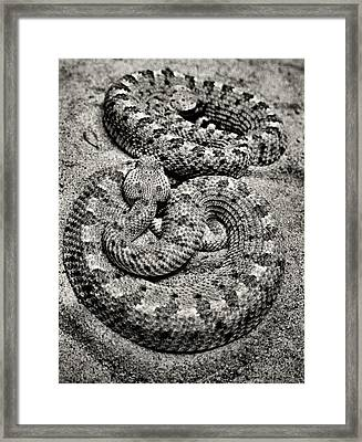 Love At First Bite Framed Print by Sally Bauer