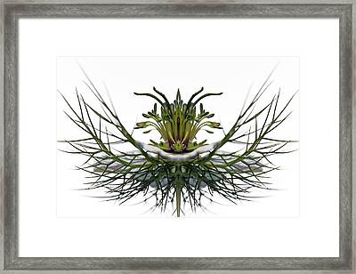 Love In A Mist Framed Print by Jean Noren