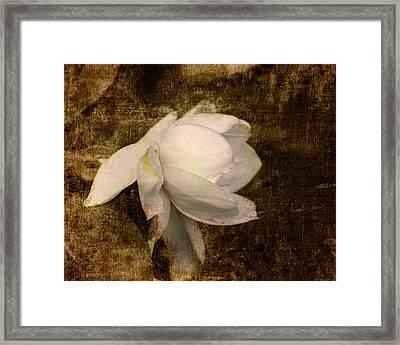 Love Letter Viii Cape Jasmine Gardenia Framed Print by Jai Johnson