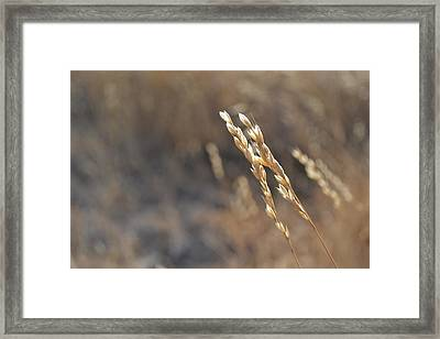 Love The Light Framed Print by Rima Biswas