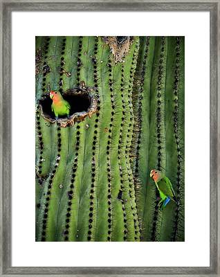 Lovebirds And The Saguaro  Framed Print by Saija  Lehtonen