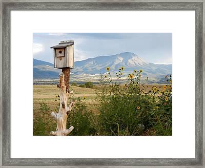 Lovely Splendor Framed Print by Sharon Farris