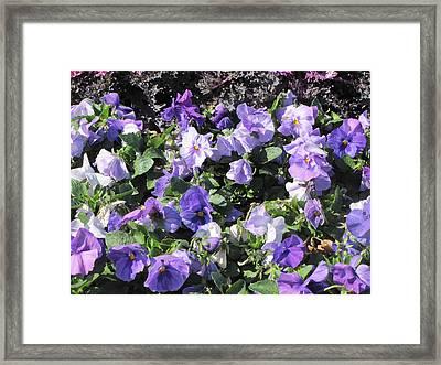 Loving Purple Flowers Framed Print by Shawn Hughes