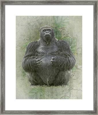 Lowland Silverback Gorilla Framed Print by Rudy Umans