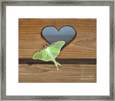 Luna Moth In Love Framed Print by The Kepharts