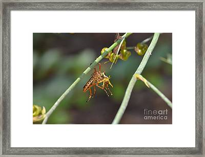 Lunch Break Framed Print by Kathy Gibbons