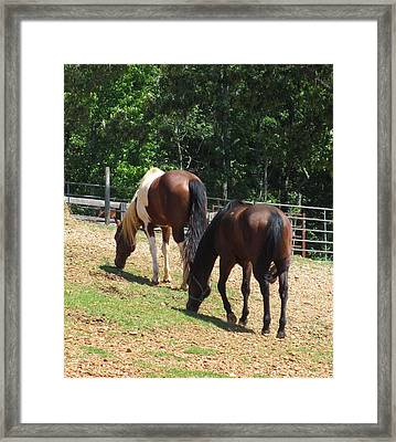 Lunch With A Friend Framed Print by Todd Sherlock