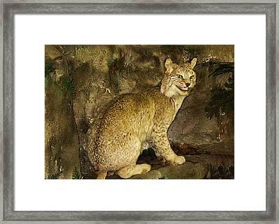 Lynx Framed Print by Bill Cannon