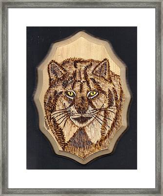 Lynx Framed Print by Clarence Butch Martin