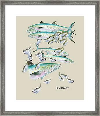 Mackerel Montage Framed Print by Kevin Brant