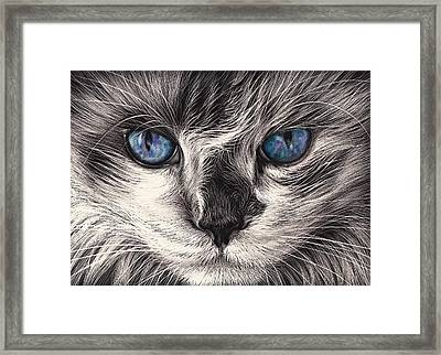Mad Cat Framed Print by Elena Kolotusha