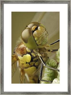 Made By Nature Framed Print by Andy Astbury