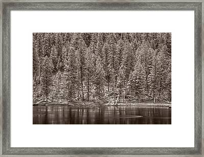 Madison River Yellowstone Bw Framed Print by Steve Gadomski