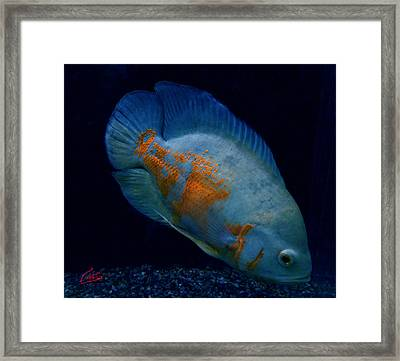 Magic Fish Name Oscar  Framed Print by Colette V Hera  Guggenheim