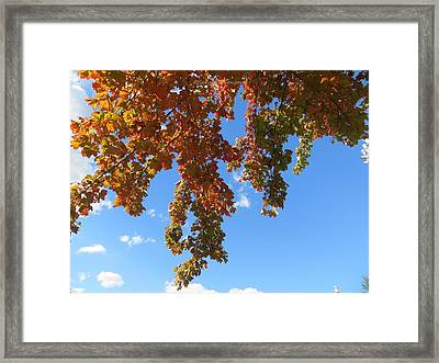 Magical Mother Nature Framed Print by Sonali Gangane