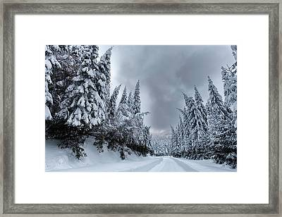Magnificent Forest Framed Print by Evgeni Dinev