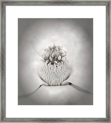 Magnolia 1 Framed Print by Rich Franco