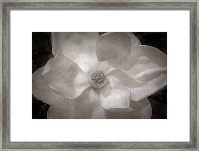 Magnolia 3 Framed Print by Rich Franco