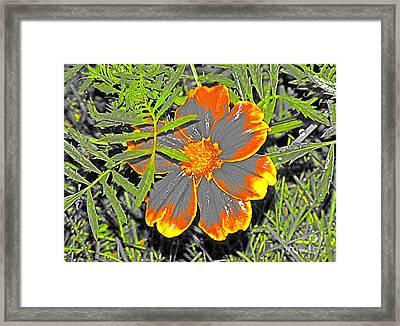 Magnolia Framed Print by Christina Perry