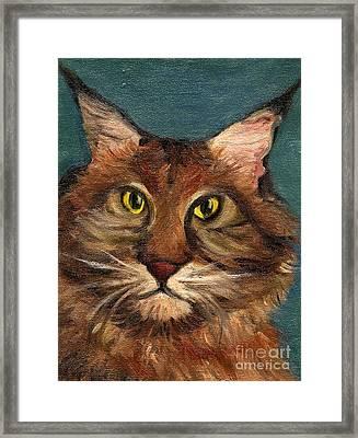 Mainecoon The Cat Framed Print by Kostas Koutsoukanidis