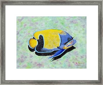 Majestic Angelfish Framed Print by Riley Geddings