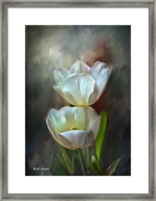 Majestic Tulips Framed Print by Bonnie Willis