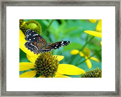 Making The Rounds Framed Print by Barbara Drake