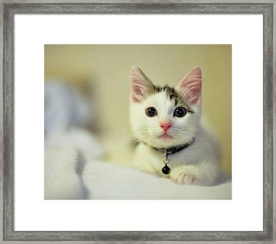 Male Kitten Sitting On Bed Framed Print by Nazra Zahri