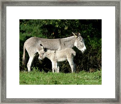 Mama Donkey And Baby Framed Print by Deborah  Smith