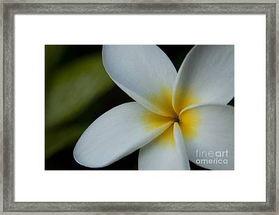 Mana I Ka Lani - Tropical Plumeria Hawaii Framed Print by Sharon Mau