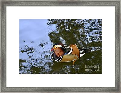 Mandarin Duck 04 Framed Print by Arik Baltinester