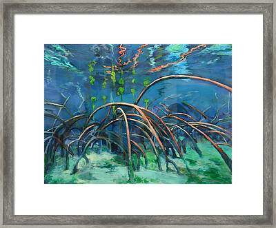 Mangrove Roots  Framed Print by Scout Cuomo