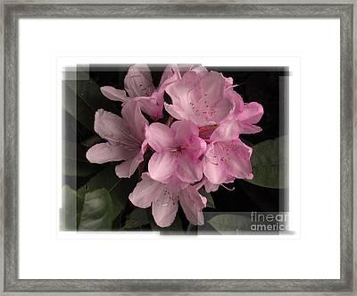 Many Splendored Blooms Framed Print by Judee Stalmack