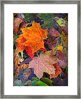 Maple Leaves  Framed Print by Geoff Strehlow